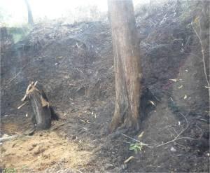 burnttrees
