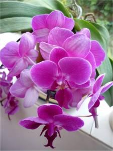 Flowers07