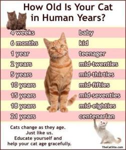 Cat Years